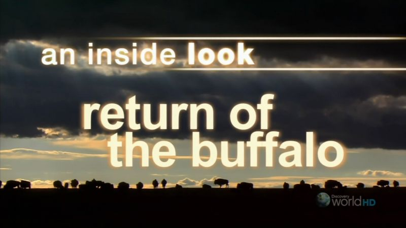 Image: Return-of-the-Buffalo-Cover.jpg