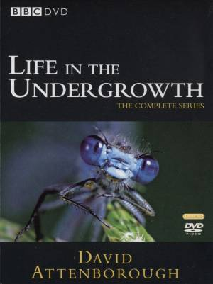 Image:Cover_Life_in_the_undergrowth.jpg
