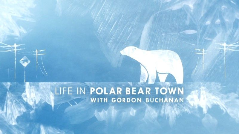 Image: Life-in-Polar-Bear-Town-Cover.jpg