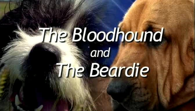 Image:Bloodhound-and-the-Beardie-Cover.jpg