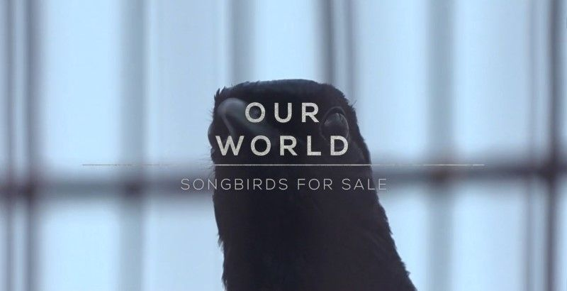 Image: Songbirds-for-Sale-Cover.jpg
