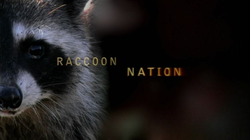 Image: Raccoon-Nation-Cover.jpg