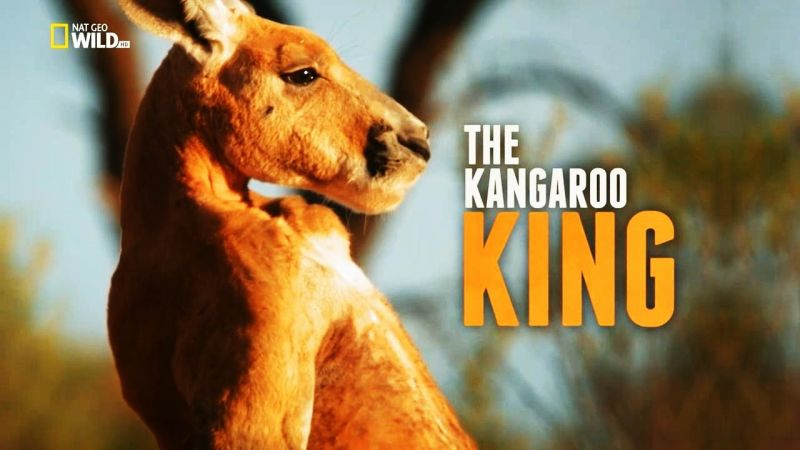 Image: The-Kangaroo-King-Cover.jpg