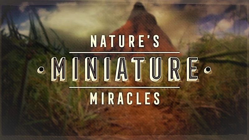 Image: Natures-Miniature-Miracles-Cover.jpg