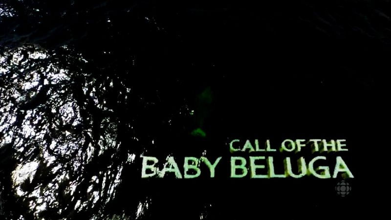 Image: Call-of-the-Baby-Beluga-Cover.jpg