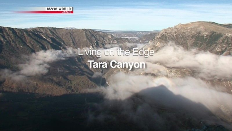 Image: Living-on-the-Edge-Tara-Canyon-Cover.jpg