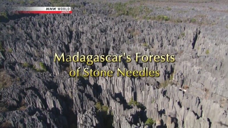 Image: Madagascar-s-Forests-of-Stone-Needles-Cover.jpg