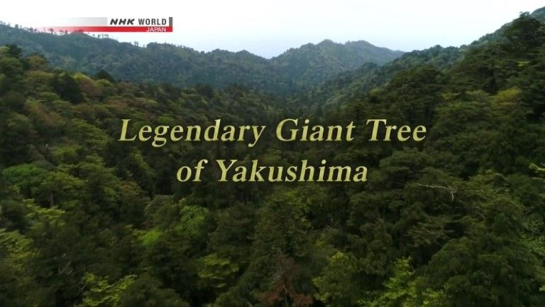 Image: Legendary-Giant-Tree-of-Yakushima-Cover.jpg