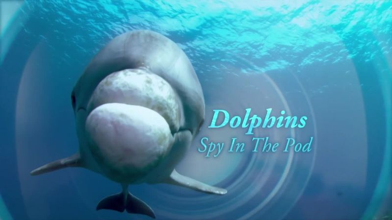 Image: Dolphins-Spy-in-the-Pod-Cover.jpg