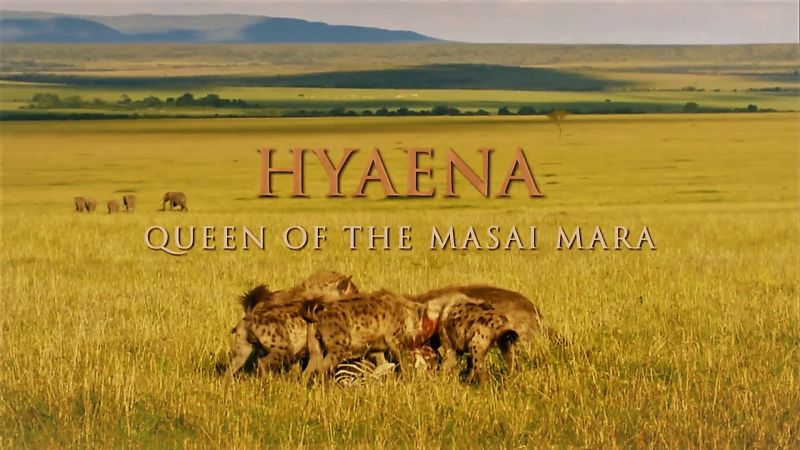 Image: Hyaena-Queen-of-the-Masai-Mara-Cover.jpg