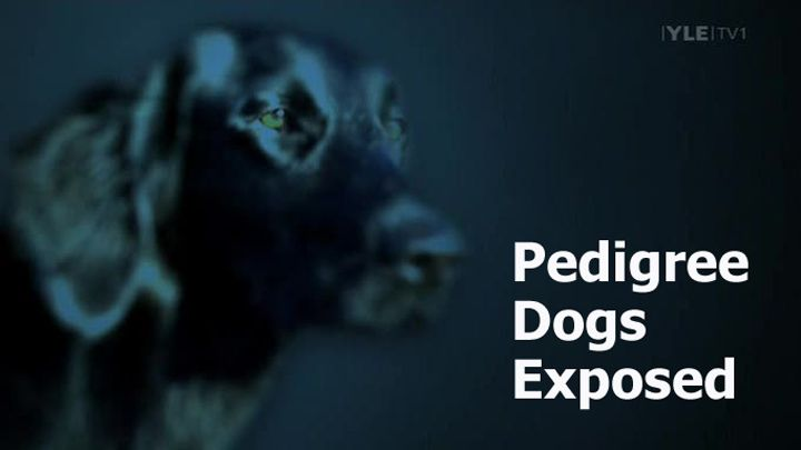 Image: Pedigree-Dogs-Exposed-Cover.jpg