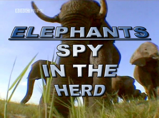 Image:Elephants_-_Spy_in_the_Herd_Cover.jpg