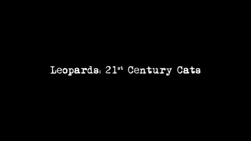 Image: Leopards-21st-Century-Cats-Cover.jpg