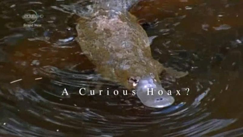 A Curious Hoax? (Natural Curiosities S1E2)