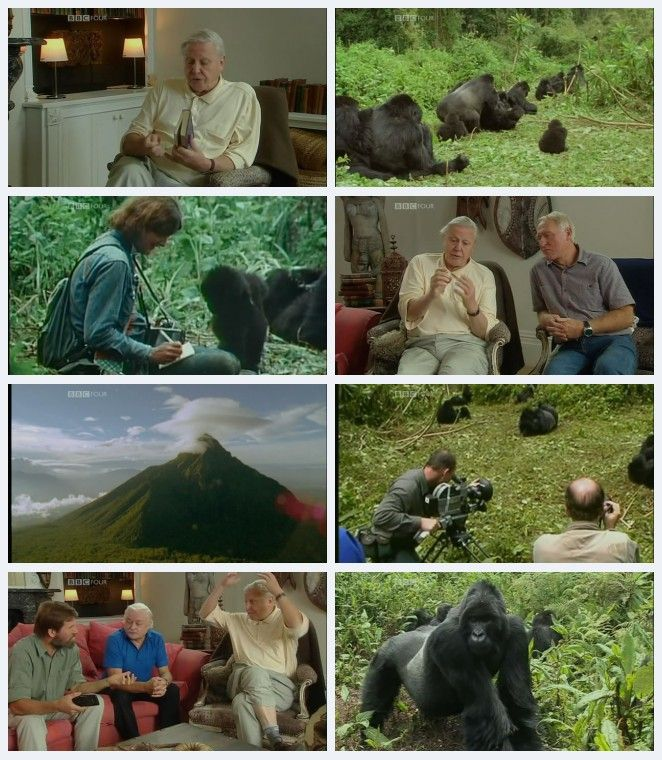 Image: Gorillas-Revisited-with-David-Attenborough-Screen0.jpg