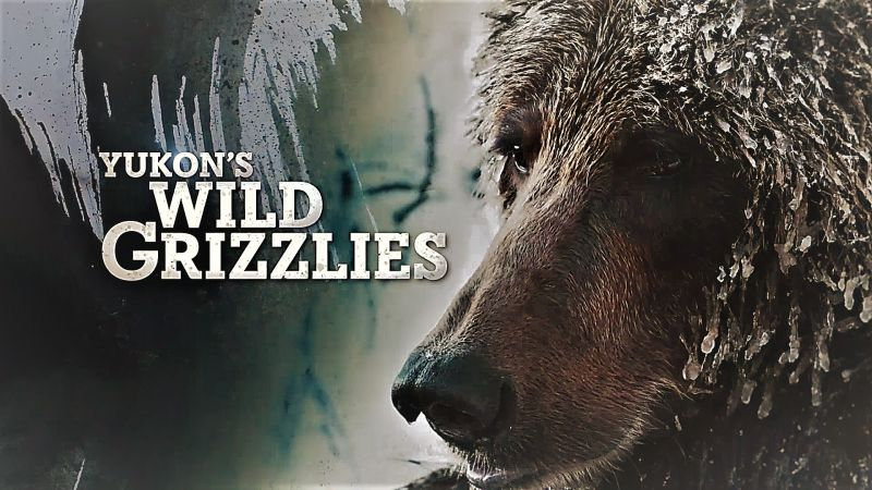 Image: Yukons-Wild-Grizzlies-Cover.jpg