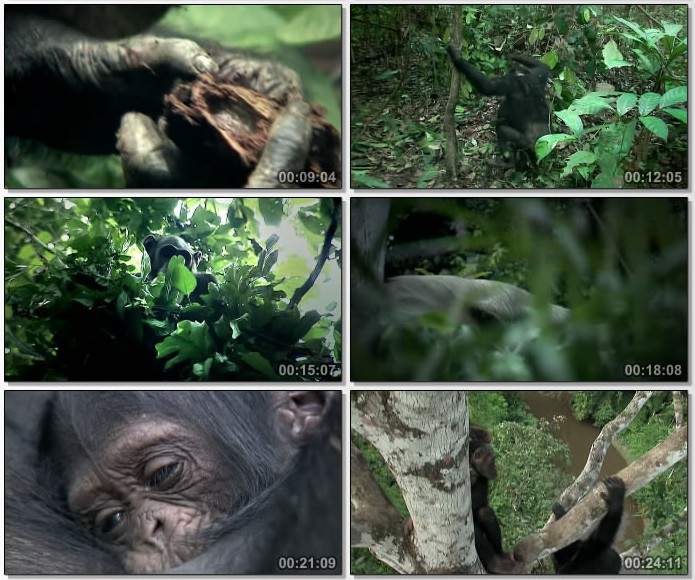 Image: A-Chimpanzees-Tale-Screen0.jpg