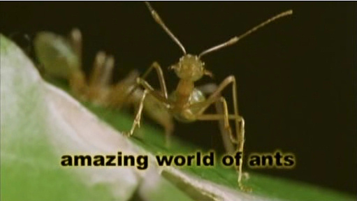 Image:Amazing_World_of_Ants_Cover.jpg