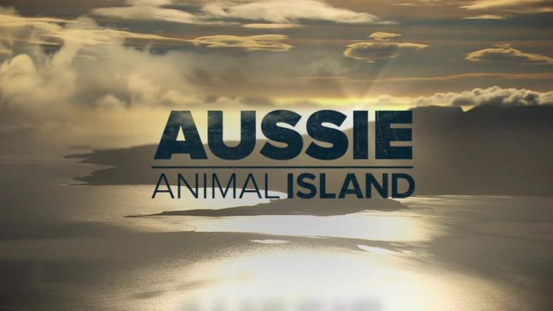 Image: Aussie-Animal-Island-Cover.jpg