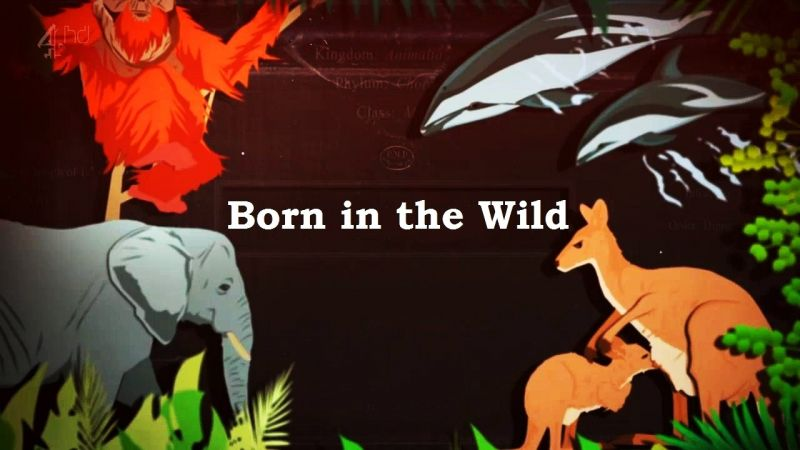 Image: Born-in-the-Wild-Cover.jpg