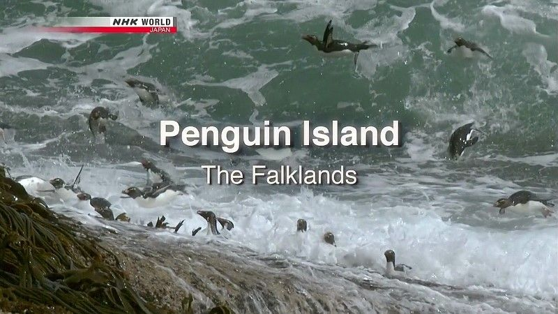 Image: Penguin-Island-The-Falklands-Cover.jpg
