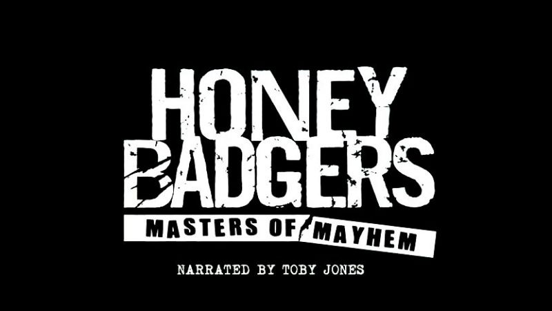 Image: Honey-Badgers-Masters-of-Mayhem-BBC-Cover.jpg