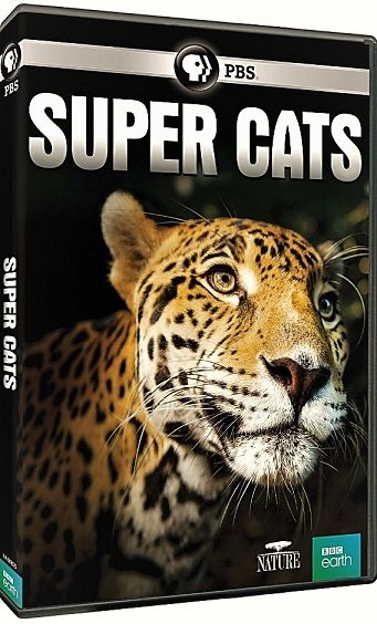 Image: Super-Cats-Series-1-Cover.jpg