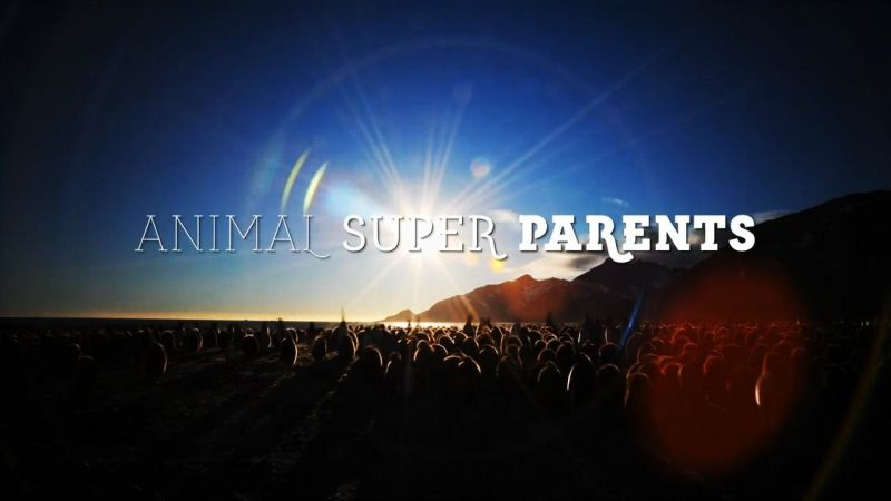 Image: Animal-Super-Parents-Series-1-Cover.jpg
