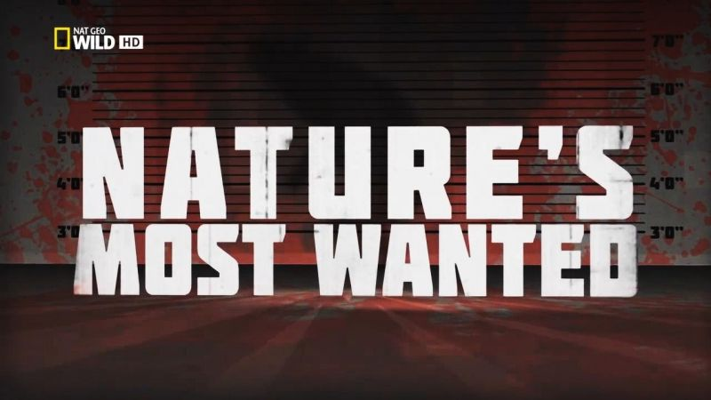 Image: World-s-Deadliest-Natures-Most-Wanted-Cover.jpg