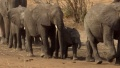 BBC Natural World 2009 Elephants Without Borders 1080p HDTV x265 AAC Forum mp4
