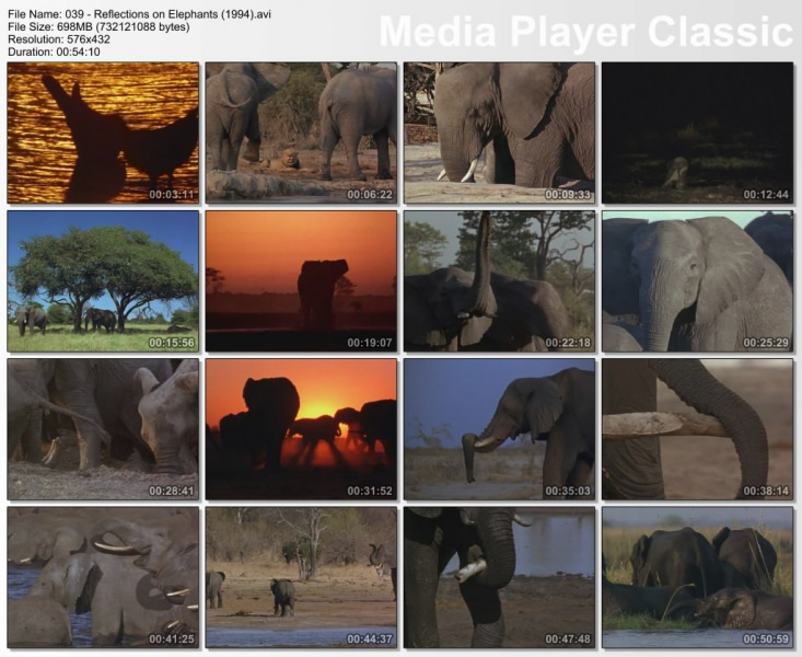 Image:Reflections-on-Elephants-Screen0.jpg